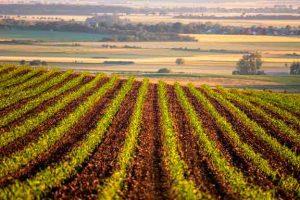 cursos-africultura-y-ganaderia